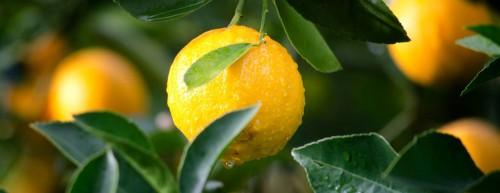 banner-jamieson-odborne-clanky-vitamin-c2.jpg